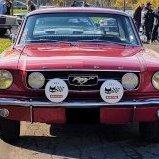 Mustang29